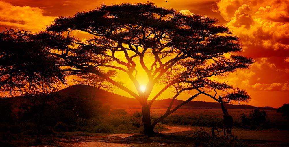 Progetto Africa - Rete Radié Resch